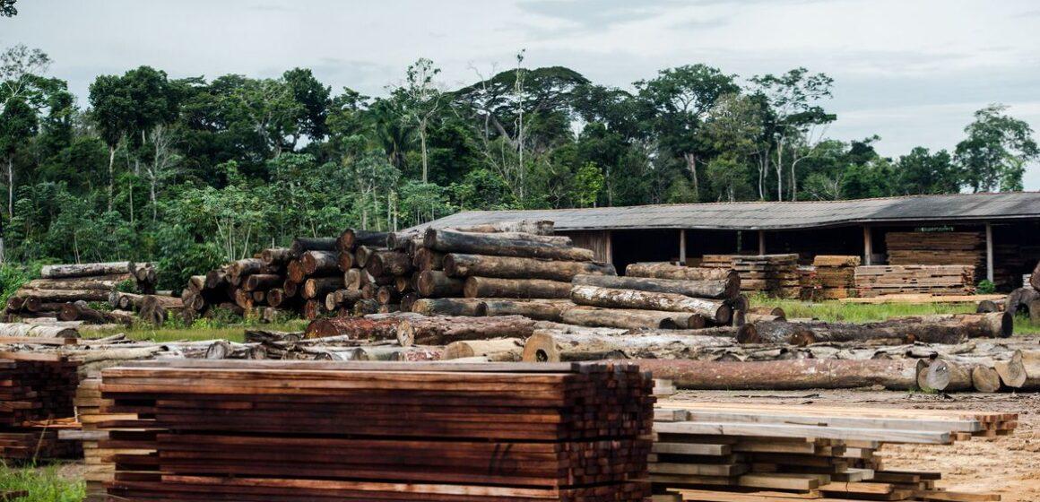 Crise no setor florestal