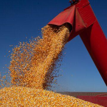 Governo zera alíquotas de tributos incidentes na importação de milho