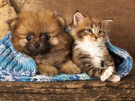Dia Nacional de Adotar um Animal será comemorado pelo 21º ano consecutivo