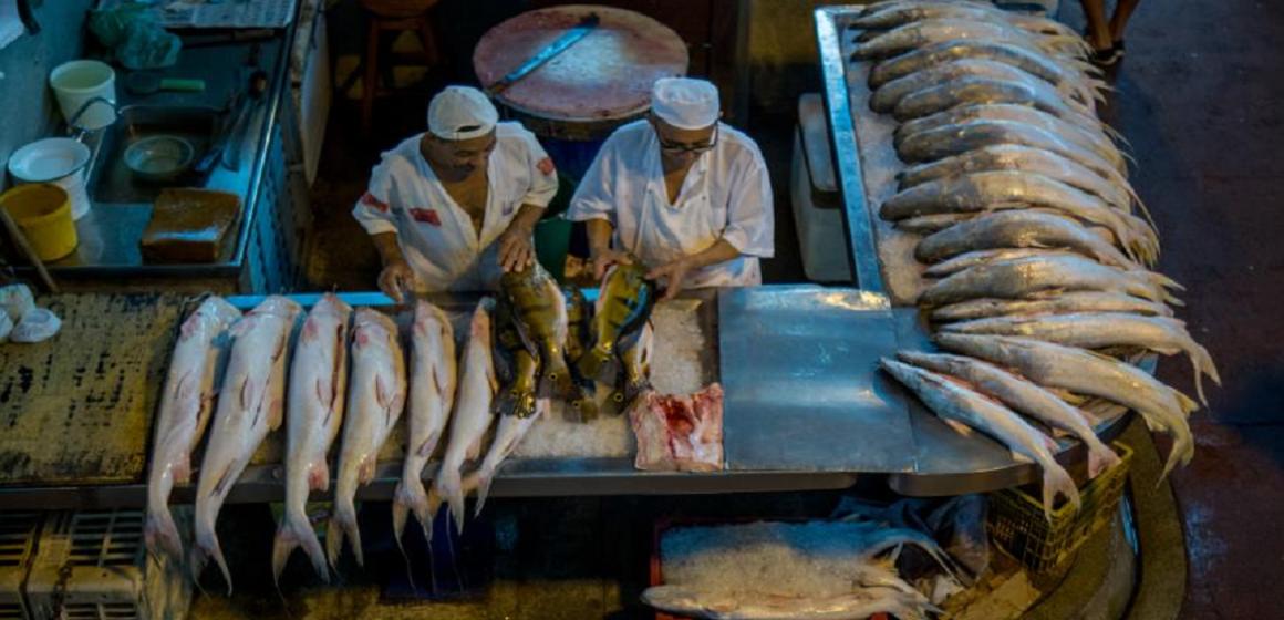 Em Belém, preço do peixe cai pela sexta vez consecutiva